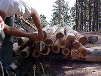 Hand Peeled Posts (Cedar Shown)